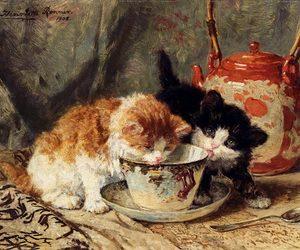 art, tea, and cat image