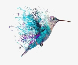 art, bird, and colibri image