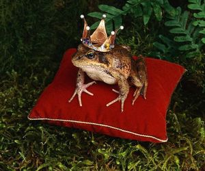 frog, fairytale, and prince image