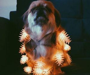 christmas, christmas lights, and puppy image