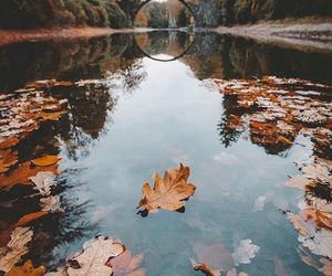 fall, photography, and autumn image