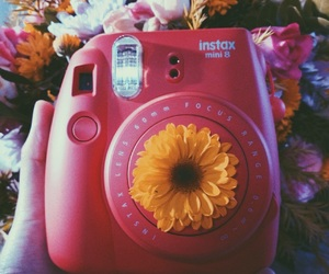 aesthetic, flower, and hippy image