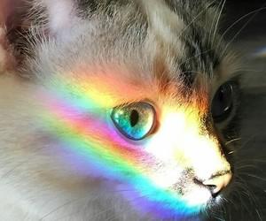 cat, eye, and rainbow image