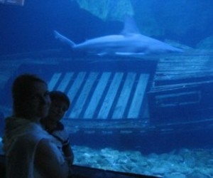 swimming with dolphins and cancun aquarium image