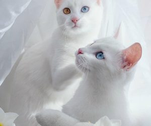 cat, aesthetic, and white image