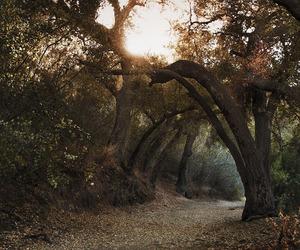 autumn, beautiful, and road image