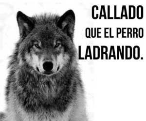 frases, lobo, and quotes image
