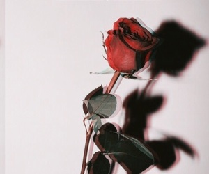 quotes, rose, and thought image
