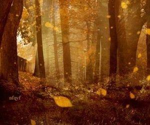 gif, autumn, and fall image