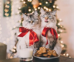 cat, christmas, and happy new year image