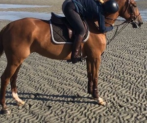 beach, horse, and chestnut image