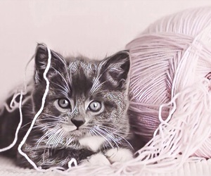 adorable, kitten, and mosaic image