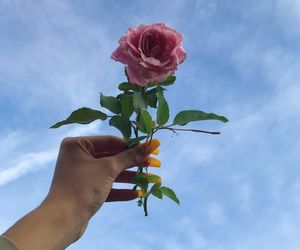 sky, pink, and rose image