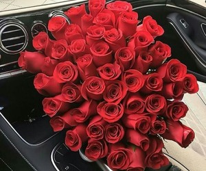 rose, red, and beautiful image