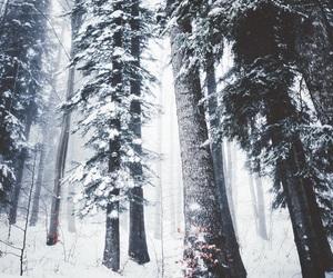 snow, tree, and winter image