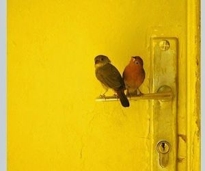 yellow, bird, and door image
