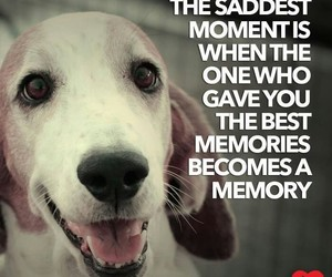 aesthetic, dogs, and quotes image
