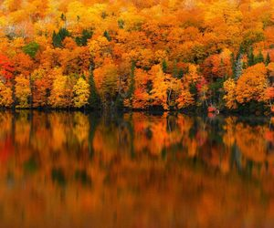 autumn, forest, and lake image