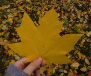 autumn, girl, and lol image