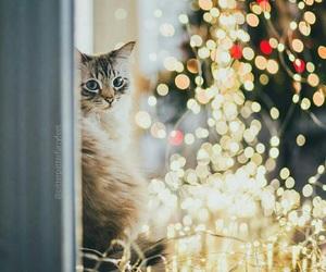winter, cat, and light image