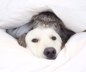 animals, friendship, and cat and dog image