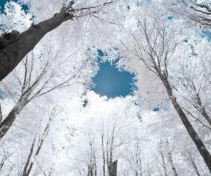tree, white, and snow image