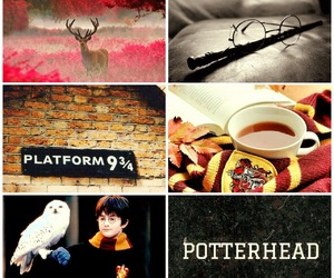 book, cool, and potter image