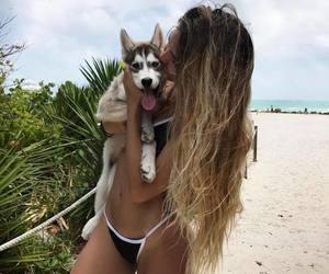 summer, animal, and beach image