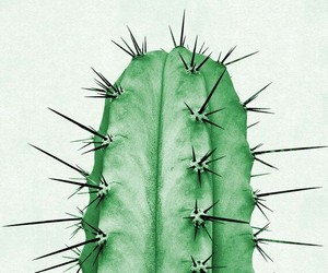 cactus, plant, and wallpaper image