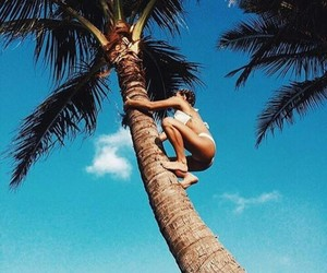 climb, palm tree, and summer image