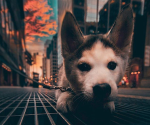 dog, puppy, and city image