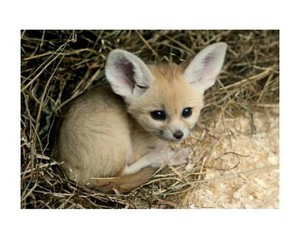 adorable, animal, and animals image