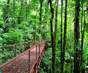 costa rica and rainforest image