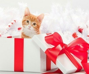cats, pet, and kitten image