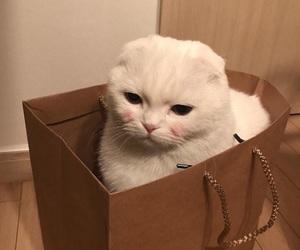 autumn, box, and cat image