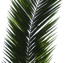 overlay, plants, and png image