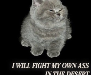 cats, quotes, and text image