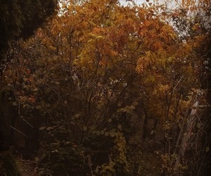 autumn, beautiful, and brown image