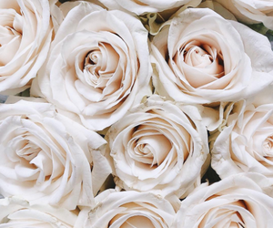 flowers, roses, and white image
