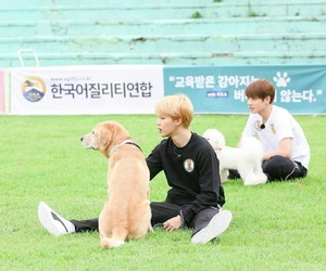 dogs, lovely, and jimin image