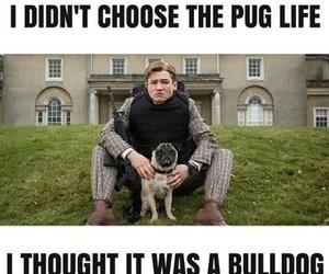 funny, pug, and kingsman image