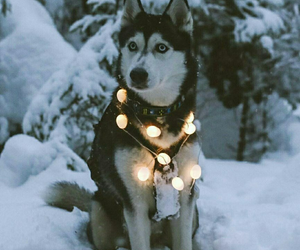 dog, lights, and winter image