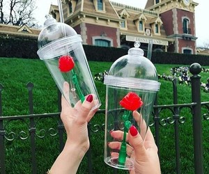 red, roses, and disneyland image