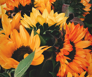 beautiful, fall, and flowers image