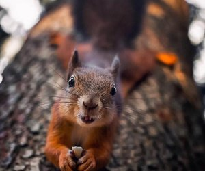 animals, nature, and cute image