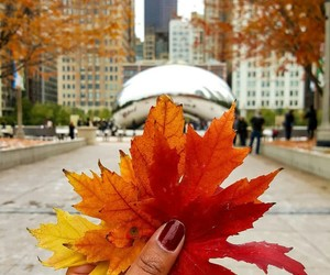 autumn, chicago, and cloud gate image