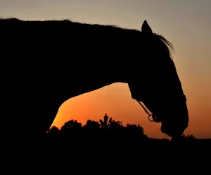 horse, sun, and equistrian image