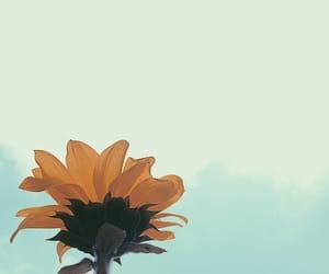 21, flower, and havana image