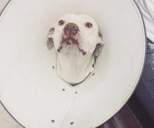 albino, cachorro, and cone image
