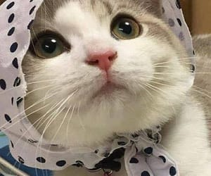 kittie, adorable, and sweet image